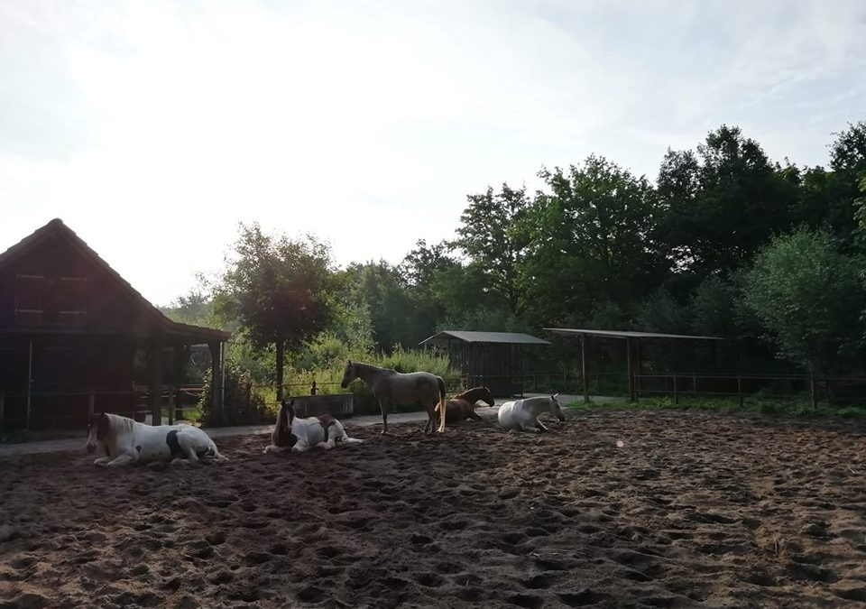 Paardeninzicht 18 juli '19